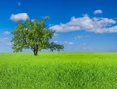 Green tree among a fields — Stock Photo