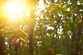 Evening sun pushing through a foliage — Stock Photo