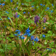 Forest glade with blue flowers — Stock Photo #9292769