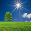 Green tree among a fields by a spring day — Stock Photo