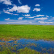 Spring flooded field — Stock Photo #9293111