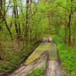 Road with pond in spring forest — Stock Photo #9293133