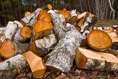 Heap of birch firewoods — Stock Photo