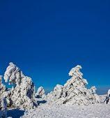 Snowbound pine forest — Stock Photo