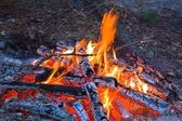 Closeup camp-fire — Stock Photo