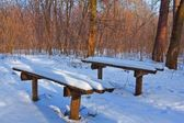 Two benches in a winter forest — Stock Photo