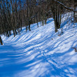 Stock Photo: Route in snowbound forest