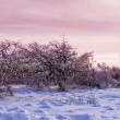 Winter snowbound forest at the dusk — Stock Photo