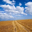 Autumn steppe — Stock Photo #9333378