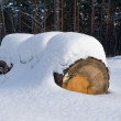 Stock Photo: Snowbound log in forest
