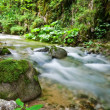 Small beautiful river in a mountain forest — Stock Photo