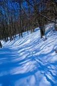Route in a snowbound forest — Stock Photo