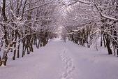 Quiet winter forest — Stock Photo