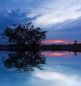 Evening tree reflecting in a water — Stock Photo