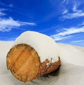 Pine log in a snow — Stock Photo