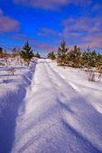 積雪の冬の森の道 — ストック写真