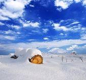Log in a snowbound plain — Stock Photo