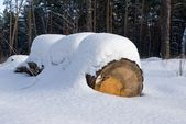 Snowbound log in a forest — Stock Photo