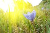 Autumn flower in a rays of sun — Stock Photo