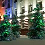 Snowbound pine trees at the night — Stock Photo
