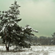 Misty winter forest — Stock Photo #9623703