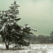 Misty winter forest — Stock Photo