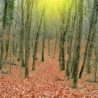 Red autumn forest in a rays of sun — Stock Photo