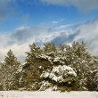 Forest thicket by a winter — Stock Photo