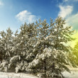 Winter forest bu a bright day — Stock Photo