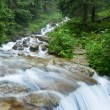 River in a mountain forest — Stock Photo