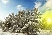 Winter wald bu ein heller tag — Stockfoto