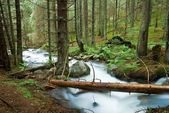Beautiful river in a forest — Stock Photo