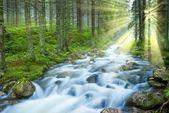 Лесная река в лучах солнца блеск — Стоковое фото