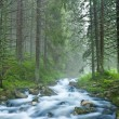 Beautiful river flow in a misty forest — Stock Photo #9634982