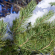 Stock Photo: Snowbound pine branch