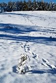 Tracks in a snow — Stock Photo