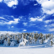 Stock Photo: Snowbound winter forest