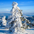 Fir tree — Stockfoto #9640743