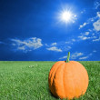 Ripen pumpkin in green grass — Stock Photo #9642642