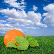 Ripen pumpkin in grass — Stock Photo #9642705