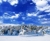 Snowbound winter forest — Stock Photo
