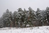 Winter snowbound quiet forest — Stock fotografie
