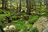 Górskie lasy — Zdjęcie stockowe