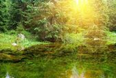 Sun reflection in a forest lake — Stock Photo