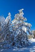 Tannenbaum im schnee — Stockfoto