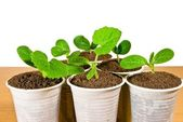Small green plants — Stock Photo