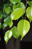 Grüne Blätter — Stock Photo
