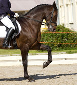 盛装舞步的马 — 图库照片