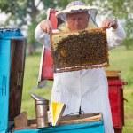 Beekeeper at work — Stock Photo
