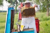 Včelař v práci — Stock fotografie
